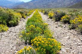 the panamint range of death valley a rattlesnake flowers and