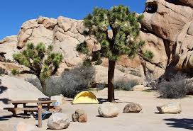 6 best cgrounds in joshua tree national park cing details