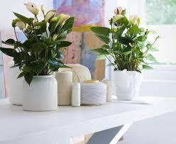 the best indoor plants plant office indoor plants stunning indoor house plants sale