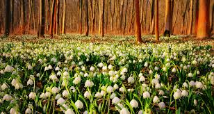 flower snowflakes forest green sunset flowers spring trees white