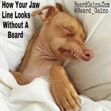 No Beard Meme - beard meme the best largest selection of beard memes online