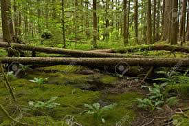Washington scenery images Washington state olympic peninsula forest scenery mossy forest jpg