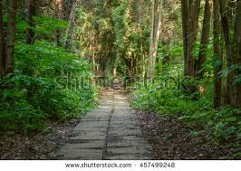 forest trees peaceful outdoor stock photo 418417834