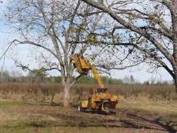 pecan tree shaker
