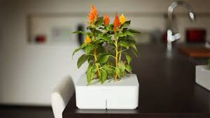 Click And Grow Refills Click And Grow The Perfect Solution For The Apartment Gardener