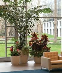 home interior plants interior decoration plants interior plants for the interior design
