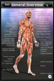 Anatomy And Physiology Study Tools Learn Muscles Anatomy Android Apps On Google Play