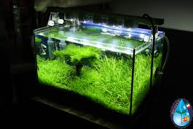 Diy Aquascape My Nano Tank With My Diy Led Light Journal Aquascaping World Forum