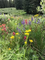 colorado native plants colorado mountain gardener