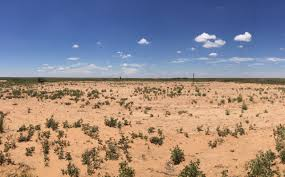 reclamation efforts in blm new mexico bureau of land management