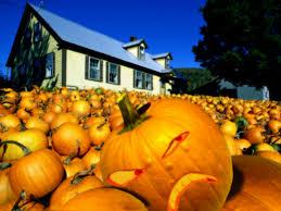cute pumpkin halloween wallpaper halloween