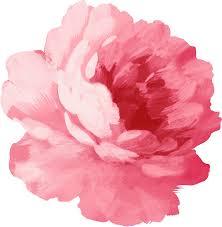 peony flowers flower pink peony stickers by olga chetverikova redbubble