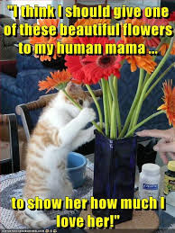 Meme Mothers Day - lolcats mothers day lol at funny cat memes funny cat pictures