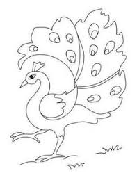 peacock coloring pages for kids pretty pretty peacocks