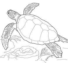 Coloriage  Tortue caouanne qui nage  Coloriages à imprimer gratuits