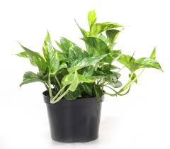 interior design exciting interior potted plant design with golden