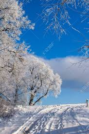 beautiful nature winter scenery frosty trees in forest stock