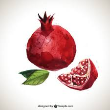 pomegranate vectors photos and psd files free download