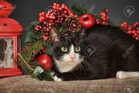 black cat with christmas background stock photo picture and