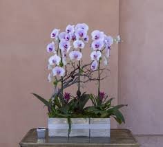 orchid arrangements orchid arrangement 29 in tarzana ca flowers and designs by
