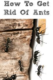 best 25 get rid of ants ideas on pinterest ant pest control