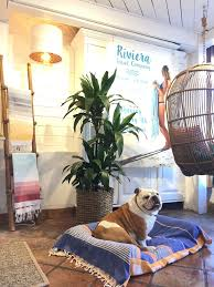 diy stylish dog bed cover from recycled turkish towels the