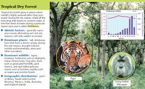 Tropical Dry Forest Animals And Plants - biomes kaiserscience