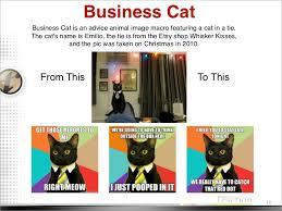 Meme Tie - tie cat meme no text cat best of the funny meme