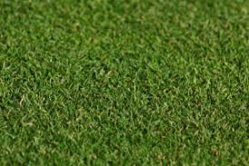lawn turf for householders landscapers and local authorities