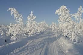 free photo winter sun cold tree free image on pixabay 195927