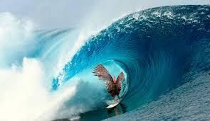 thanksgiving surf 7 images of turkeys getting super barreled the inertia