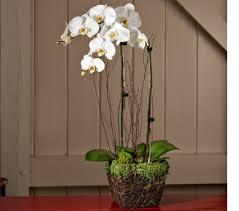 sympathy gifts sympathy gifts white flower farm