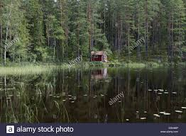 view of small cottage in coniferous forest beside lake