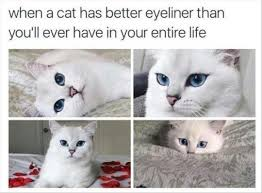 Cat Memes Tumblr - i can has cheezburger tumblr page 2 funny animals online