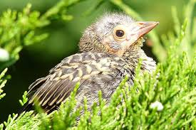 baby bird identification tips and tricks
