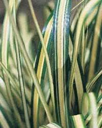 grass default title