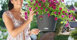 style and efficiency come to hanging baskets with new self