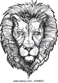 hand sketch of lion head with mane lion drawing and animal sketch