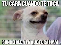 Memes De Chihuahua - perro chihuahua meme s mega memeces risas pinterest meme