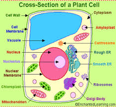 sciencelanguagegallery ks3 cells reproduction and inheritance