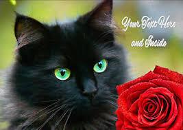 personalised black cat kitten rose birthday anniversary fathers