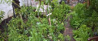 sustainable vegetable gardening u2013 polyculture gardening for the