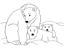 printable polar bear coloring cool polar animal coloring pages