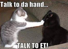Talking Cat Meme - talk to the hand cats pinterest cat animal and