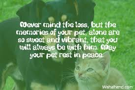 pet condolences never mind the loss but the sympathy message for loss of pet