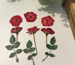 dried roses 120pcs pressed dried bud leaf flower for wedding party