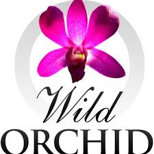 www wildorchidinternational com new webpage by wildorchidaustralia