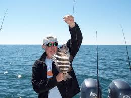 santee cooper fishing guides sheepshead fishing charters in hilton head south carolina