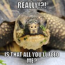 Tortoise Meme - memes