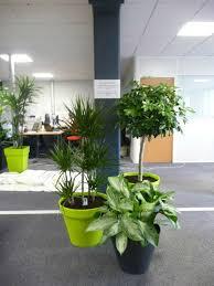 plante verte bureau lupin c est aussi la mise en place de plantes vertes pour l